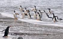 Bekleidung für Antarktis-Kreuzfahrten