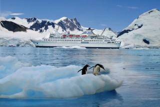 MS Delphin - Antarktis
