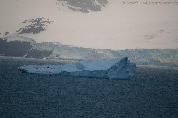 Pinguine auf einer Eisscholle vor Elephant Island