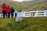 Grytviken 2013 - MS Delphin 13
