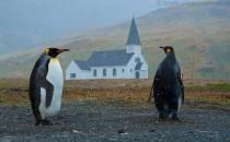 Grytviken: Reisebericht Antarktis mit MS Delphin