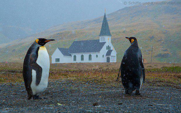 Pinguine vor der Kirche in Grytviken
