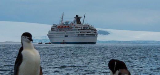 Zügelpinguine auf Half Moon Island vor der MS Delphin