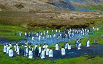 Jason Harbour: Reisebericht Antarktis mit MS Delphin