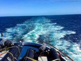 MS Delphin - Heckwelle