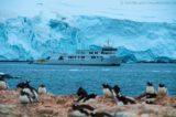 Palmer Archipel - MS Delphin 23