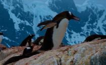 Jougla Point: Reisebericht Antarktis mit MS Delphin