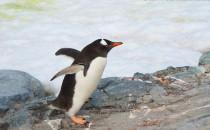 Petermann Island: Reisebericht Antarktis mit MS Delphin