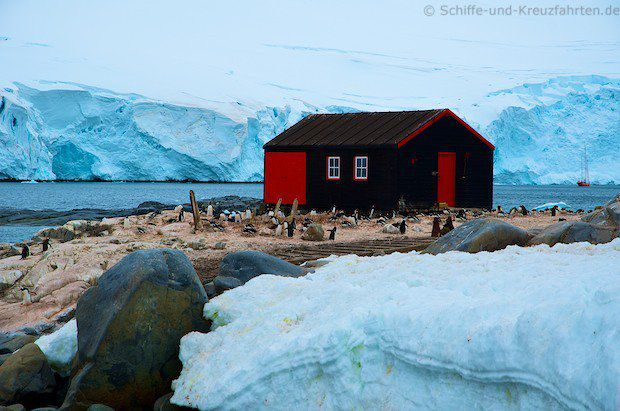 Pinguine in Port Lockroy