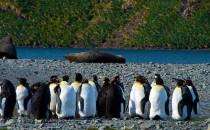 Stromness Bay: Reisebericht Antarktis mit MS Delphin