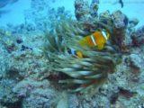 Unterwasserwelt (1)