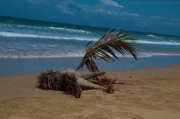 Zusammengebastelte Palme am Muara Beach