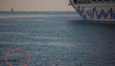 Kapitän der AIDAmar ruft Seenotretter: Ein Reh im Rostocker Hafenbecken