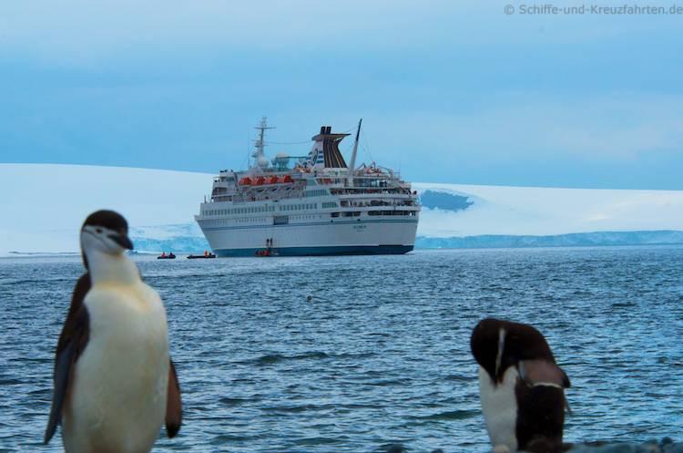 MS Delphin mit Zügelpinguinen in der Antarktis - Half Moon Island
