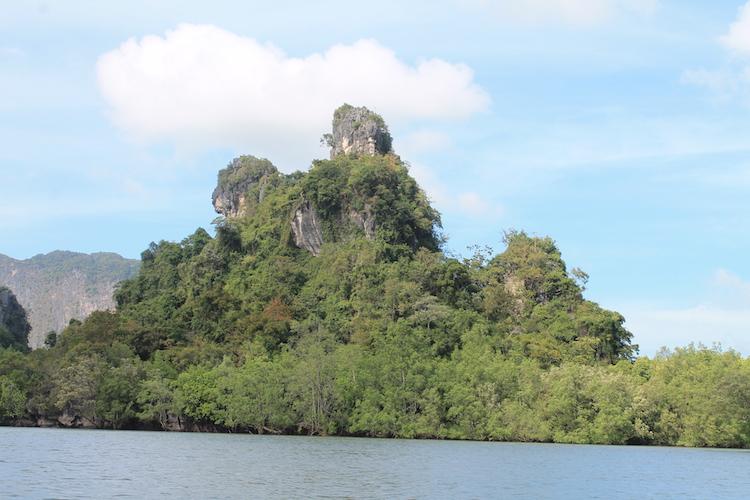 Mangroven bewachsene Kalksteinfelsen