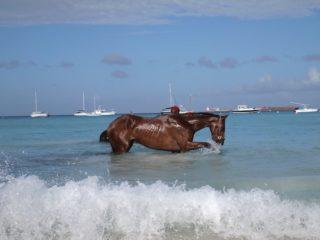 Pebbles Beach Barbados