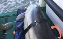 DGzRS rettet Delfin vor Amrum
