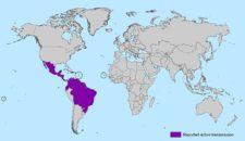 Zika Virus Kreuzfahrten