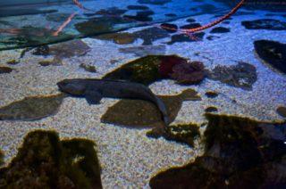 Sealife Blankenberge - AIDAprima
