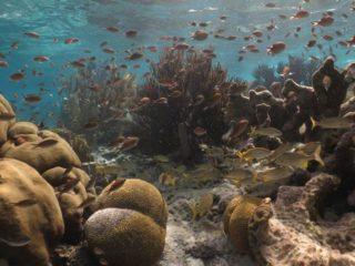 AIDAluna Bonaire