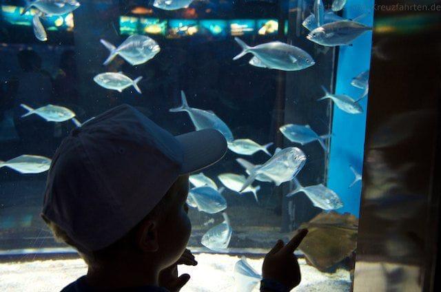 Julian im Aquarium in Barcelona