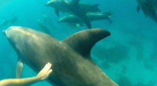 Schnorcheln mit Delphinen in Hurghada