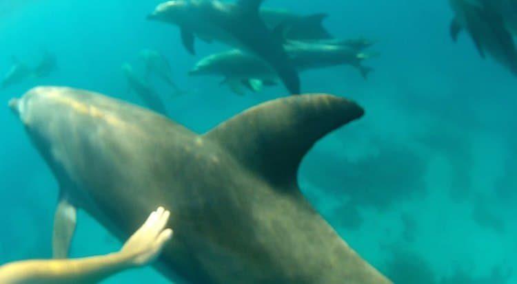 Delfinschwimmen in Hurghada - Ägypten