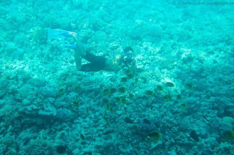 Der Fotograf des Glasboot-Teams filmt die Fische aus kleinster Nähe