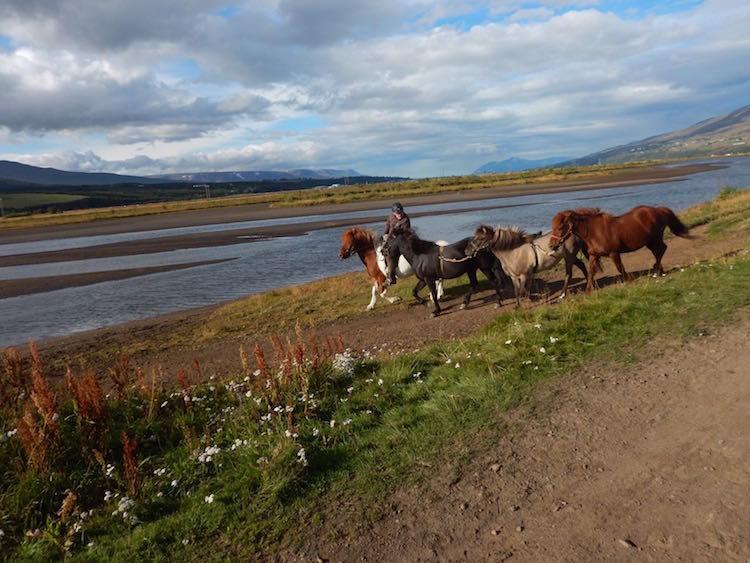 AIDA Landausflug Akureyri: Auf dem Rücken von Islandpferden
