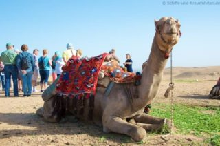 kamel-gizeh