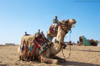 kamel-pyramiden-von-gizeh-1