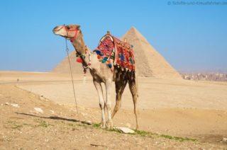 kamel-vor-den-pyramiden