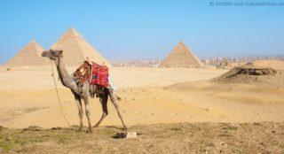 kamel-vor-pyramiden