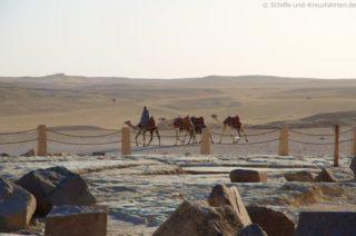 kamele-an-den-pyramiden-von-gizeh