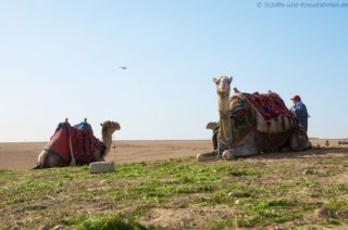 kamele-pyramiden-von-gizeh-2