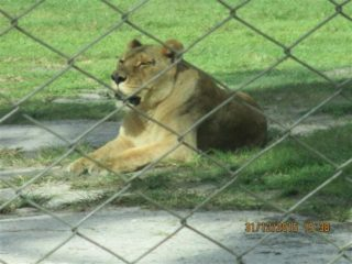 lion-country-safaripark-04