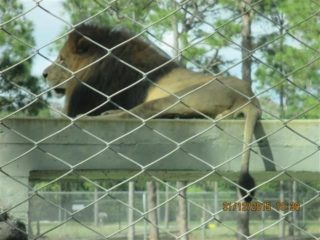 lion-country-safaripark-05