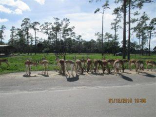 lion-country-safaripark-10