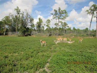 lion-country-safaripark-11