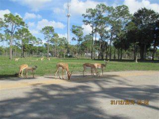 lion-country-safaripark-12