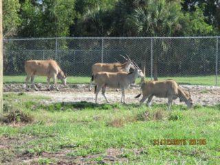 lion-country-safaripark-16