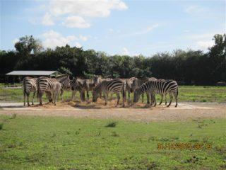 lion-country-safaripark-18