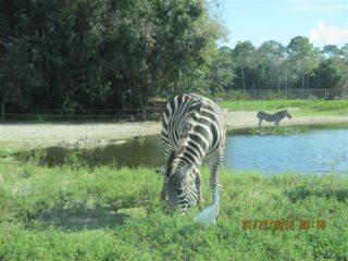 lion-country-safaripark-19