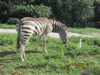lion-country-safaripark-20