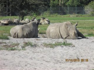 lion-country-safaripark-21