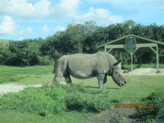 lion-country-safaripark-23