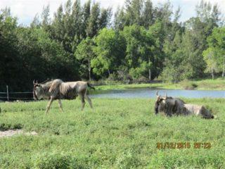 lion-country-safaripark-24