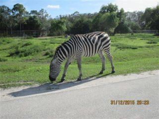 lion-country-safaripark-25