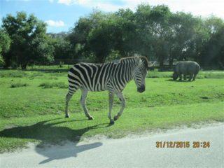 lion-country-safaripark-26