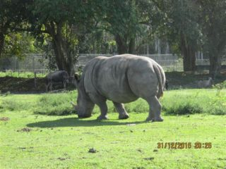 lion-country-safaripark-27